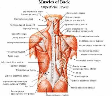 lower-back-exercises